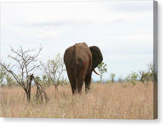 Ancient Elephant Canvas Print by Debbie Cundy