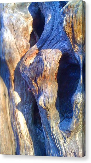 Ancient Giant Arborvitae 2 Canvas Print by Karl Reid