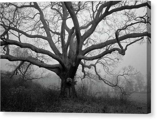 Ancient Oak Tree V - Sheep Pasture Canvas Print