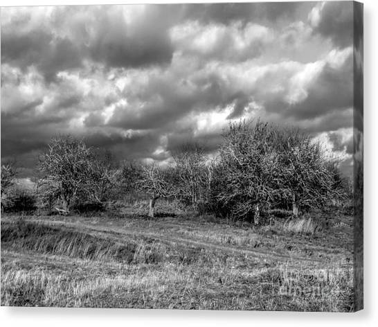 Ancient Orchard Canvas Print