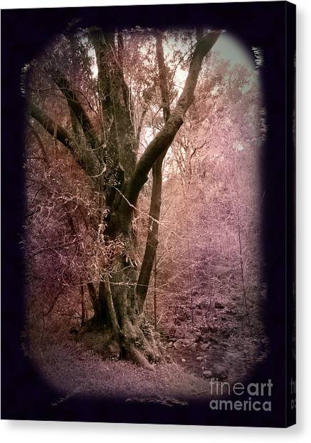 Ancient Tree By A Stream Canvas Print by Laura Iverson