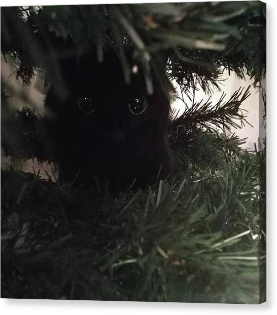 Innocent Canvas Print - And A Charlie Cat In A Christmas Tree by Sian Thomas