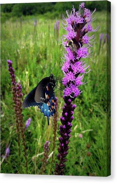 And The Bee Canvas Print