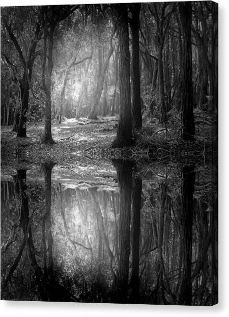 And There Is Light In This Dark Forest Canvas Print