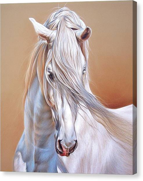 Andalusian - Detail Canvas Print