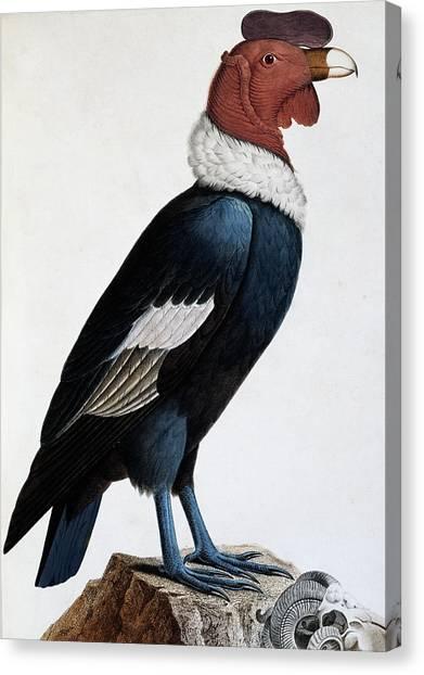 Condors Canvas Print - Andean Condor by English School