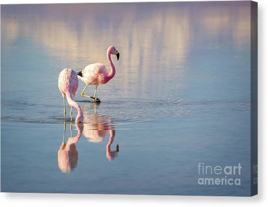 Andes Mountains Canvas Print - Andean Flamingos In Chile by Delphimages Photo Creations