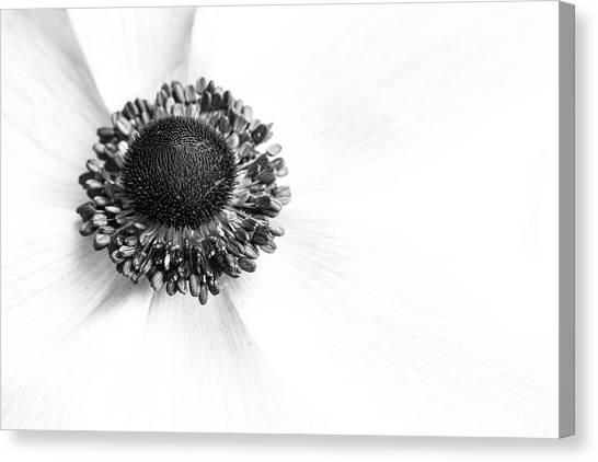 Anemone Bloom Canvas Print