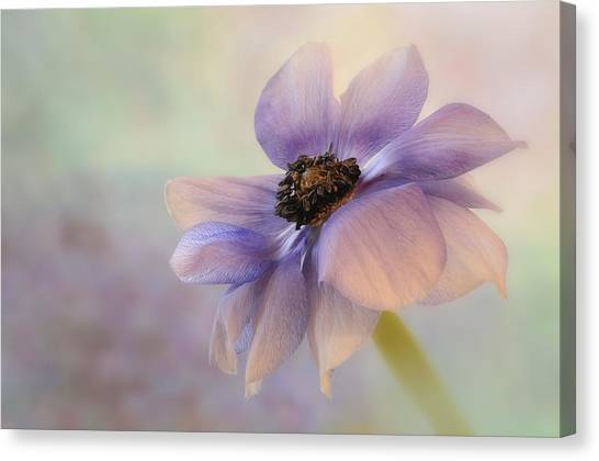 Anemone Flower Canvas Print