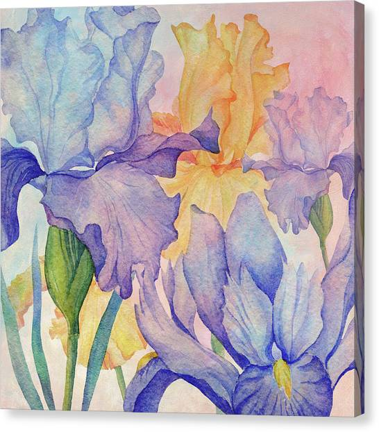 Canvas Print - Angel Iris - Delight by Amanda Lakey