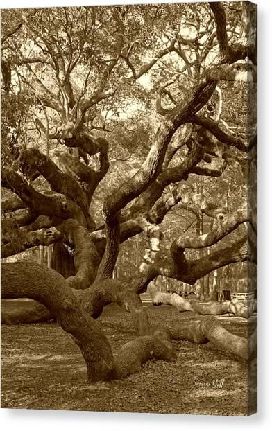 Angel Oak In Sepia Canvas Print