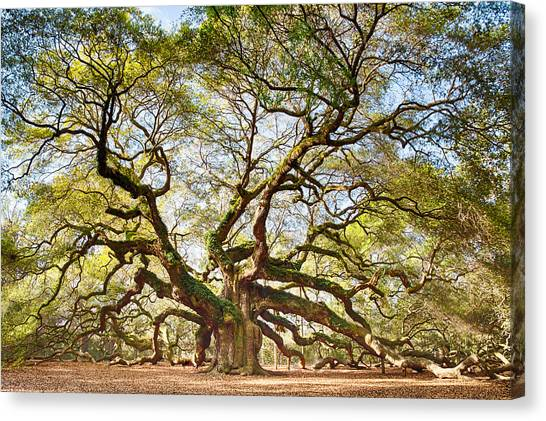 Angel Oak In Spring Canvas Print