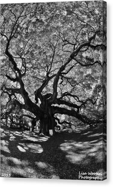 Angel Oak Johns Island Black And White Canvas Print