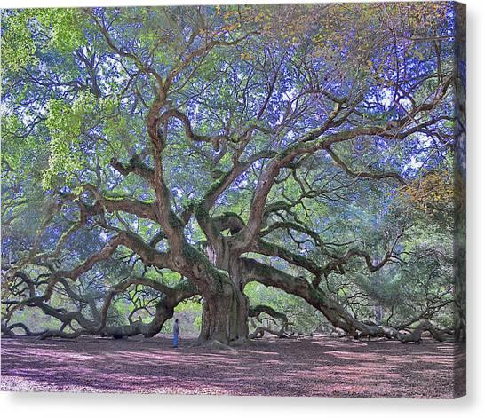 Angel Oak, John's Island, Sc Canvas Print by Garry Turpin