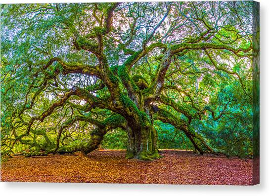 Angel Oak Tree Charleston Sc Canvas Print