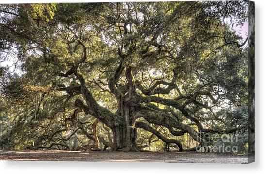 Angel Oak Tree Live Oak  Canvas Print