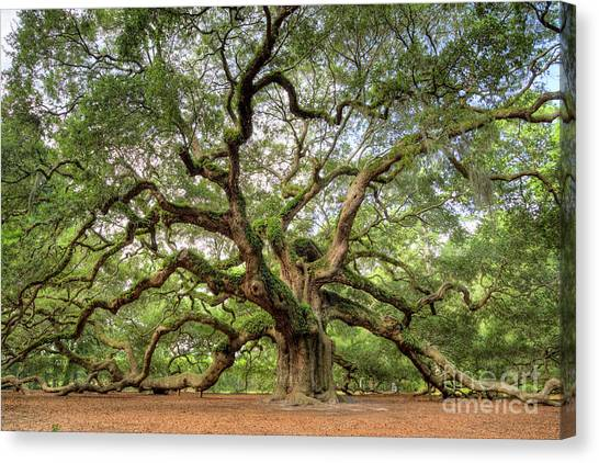 Angel Oak Tree Of Life Canvas Print
