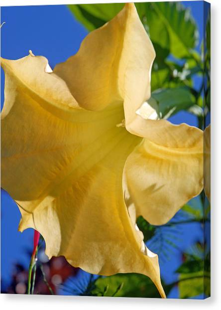 Yellow Trumpet Canvas Print - Angel Trumpet by Donald Hawkaye Hill