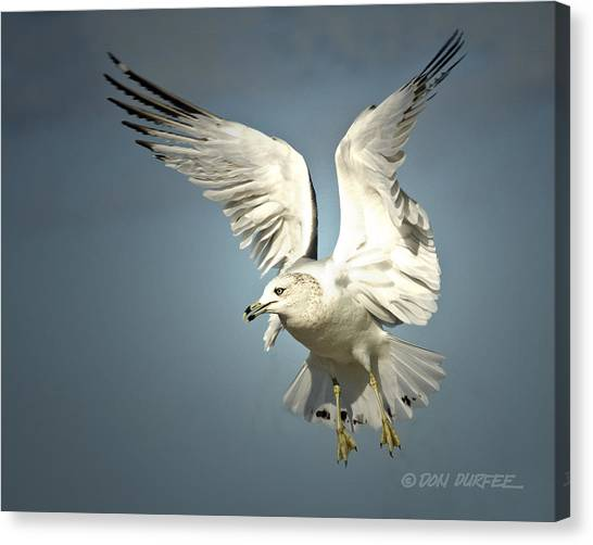 Canvas Print - Angel Wings by Don Durfee