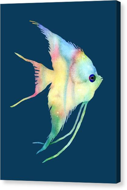 Freshwater Canvas Print - Angelfish I - Solid Background by Hailey E Herrera