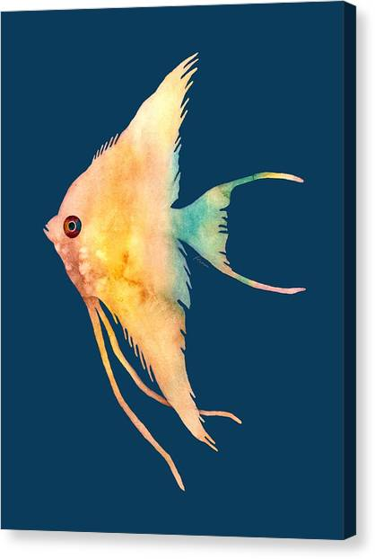Angelfish Canvas Print - Angelfish II - Solid Background by Hailey E Herrera