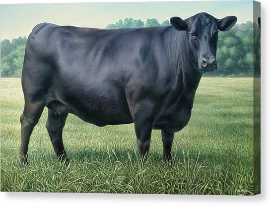 Angus Cow 182m 2 2007 Canvas Print