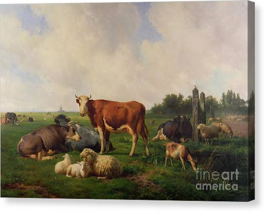 Ewe Canvas Print - Animals Grazing In A Meadow  by Hendrikus van de Sende Baachyssun