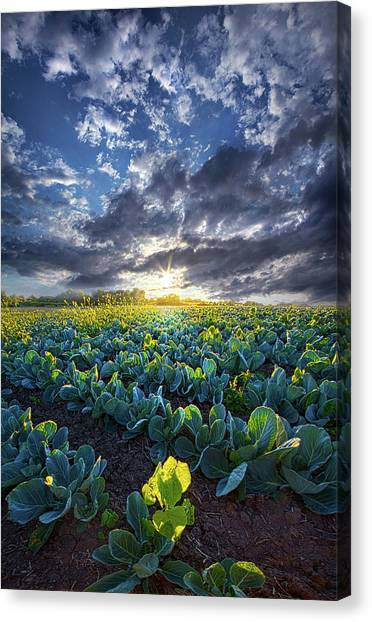 Cabbage Canvas Print - Ankle High In July by Phil Koch