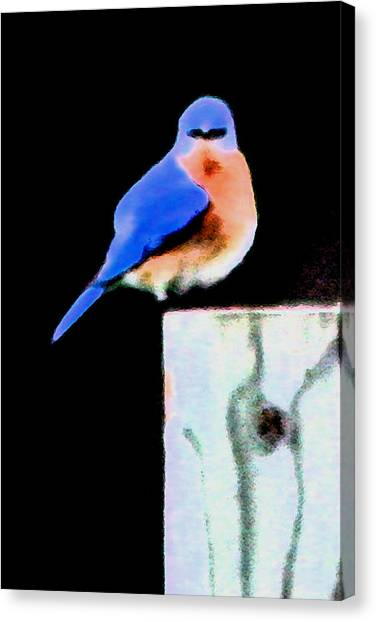 Another Angry Bluebird Canvas Print by Alan Skonieczny