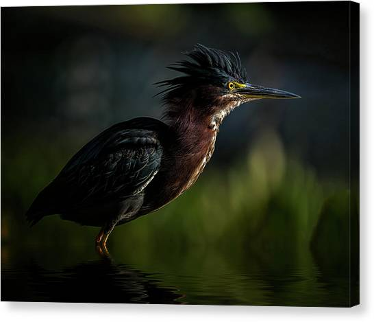 Another Bad Hair Day Canvas Print