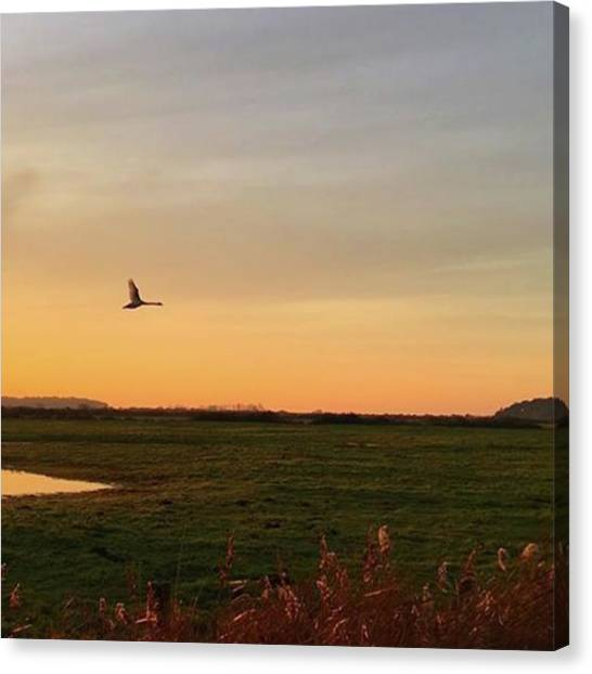 Landscape Canvas Print - Another Iphone Shot Of The Swan Flying by John Edwards