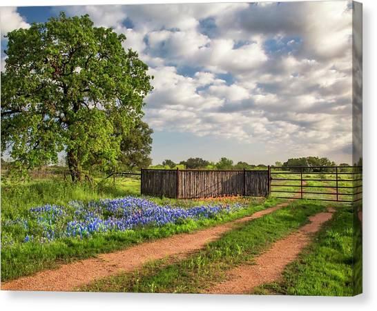 Bluebonnet Ranch Road Canvas Print