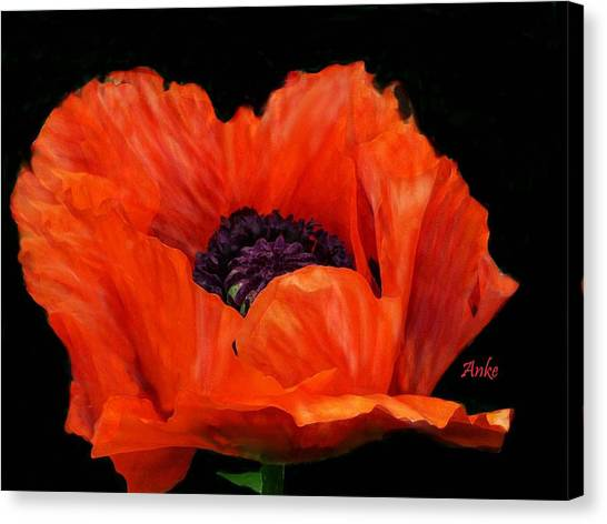 Another Red Poppy Canvas Print by Anke Wheeler
