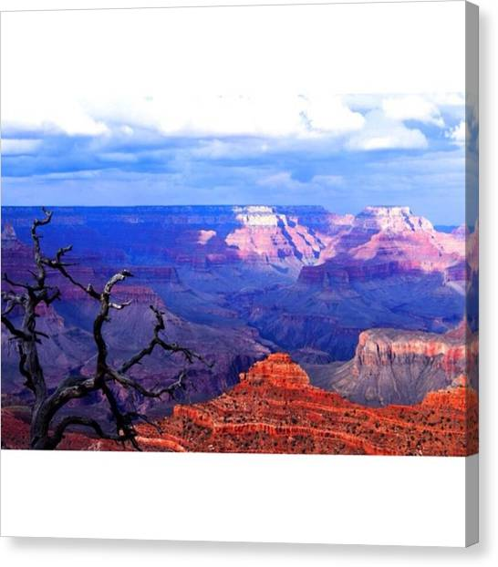 Scotty Canvas Print - Another Shot Today From The Grand by Scotty Brown