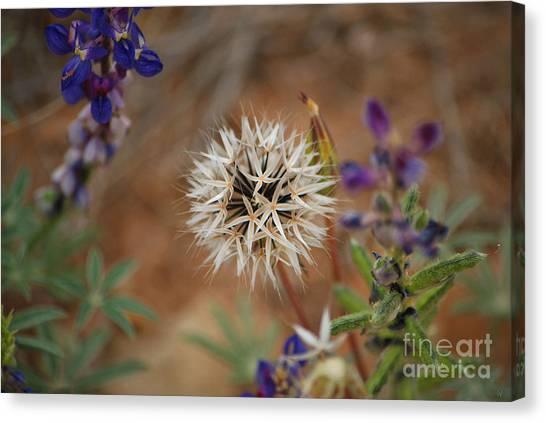 Another White Flower Canvas Print