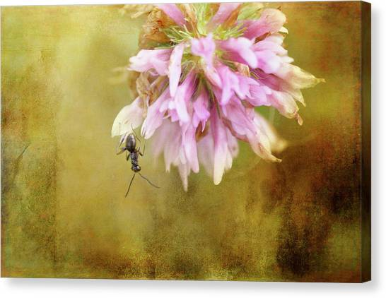 Ants Canvas Print - Ant Acrobatics by Susan Capuano