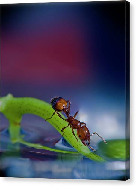 Ant Canvas Print - Ant In A Colorful World by Bob Rasulev