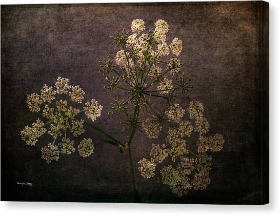 Canvas Print featuring the photograph Anthriscus Sylvestris by Randi Grace Nilsberg