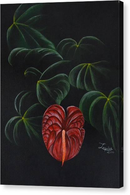 Anthurium Canvas Print by Roberta Landers