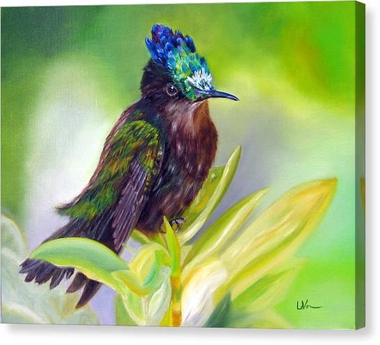 Antillean Crested Hummingbird Canvas Print