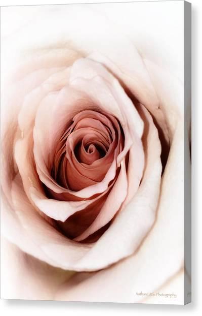 Antique Rose Canvas Print