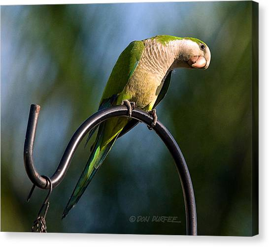 Canvas Print - Any Peanuts In There by Don Durfee