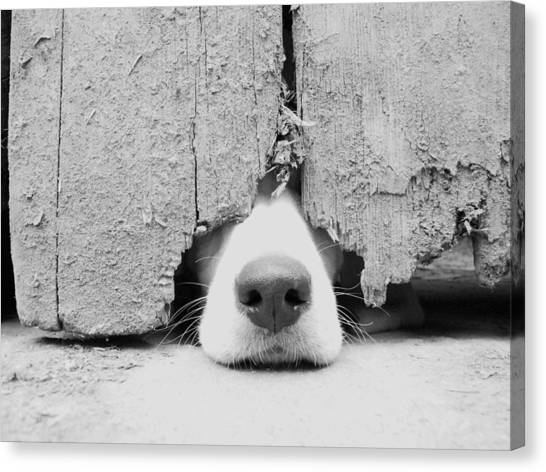 Black and white dog canvas print anyone out there by by jake p johnson