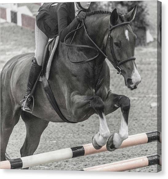 Warmblood Horse Canvas Print - Anything For You by Betsy Knapp