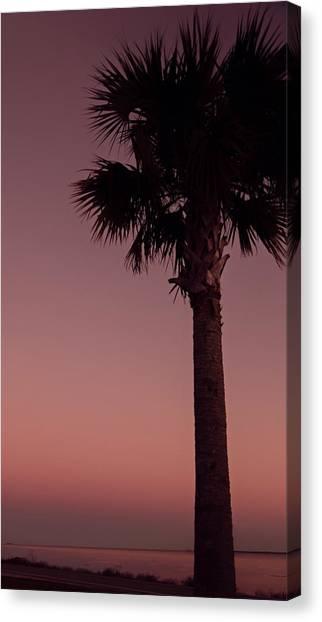 Apalachicola Palm Canvas Print