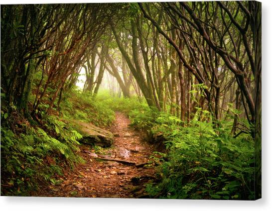 Appalachian Hiking Trail - Blue Ridge Mountains Forest Fog Nature Landscape Canvas Print