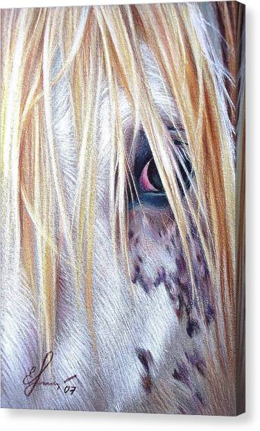 Appaloosa Canvas Print