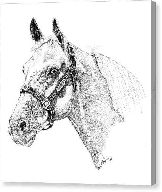 Appaloosa Canvas Print