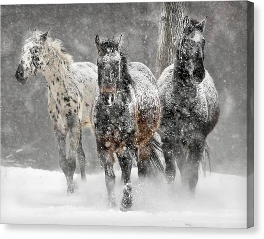 Appaloosa Winter Canvas Print