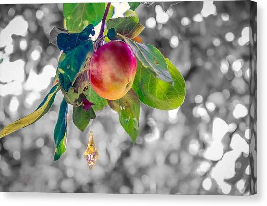 Apple And The Diamond Canvas Print